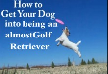 FRISBEE GOLF DOGS: Ultimate almostGolf ball retriever